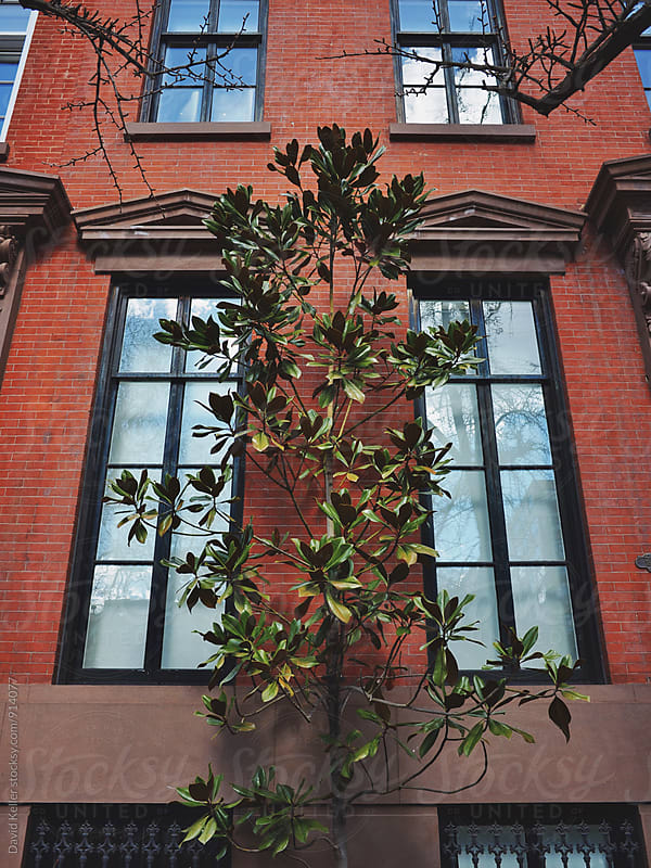 Green Leafy Plant by David Keller for Stocksy United