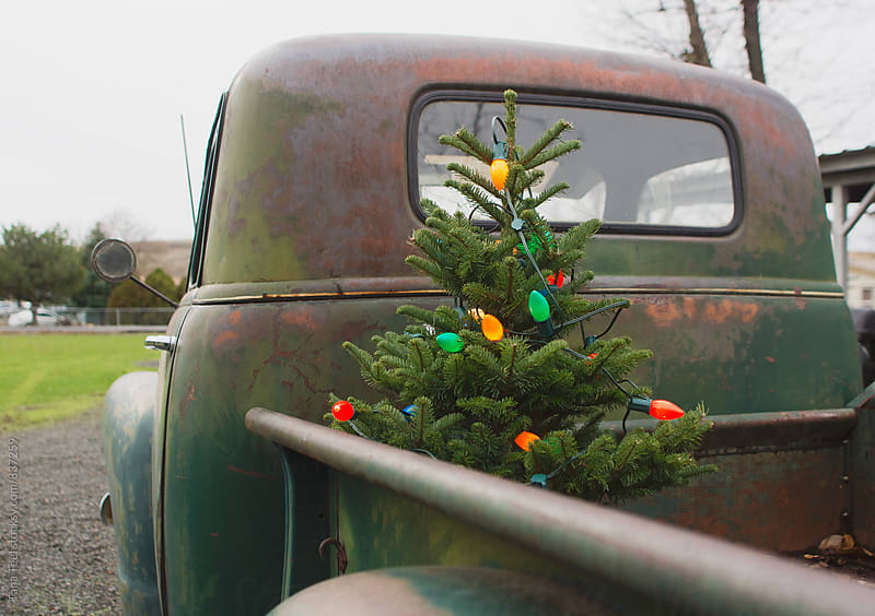 Christmas tree in back of old truck by Tana Teel for Stocksy United