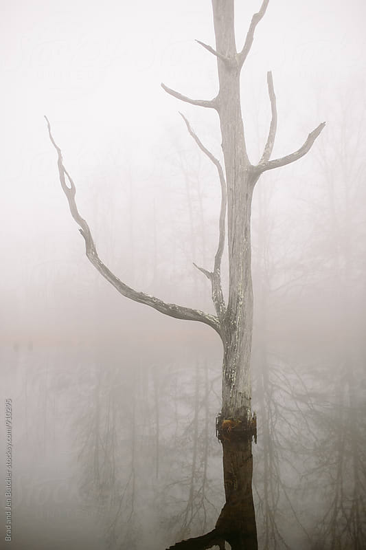 Tree in Fog by Brad and Jen Butcher for Stocksy United