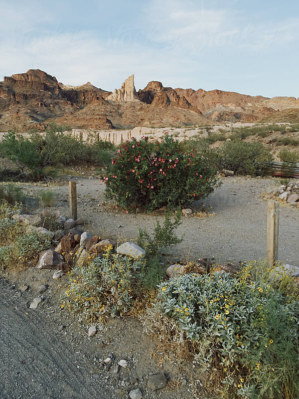 Southwestern Roadside Scene by Kevin Russ for Stocksy United