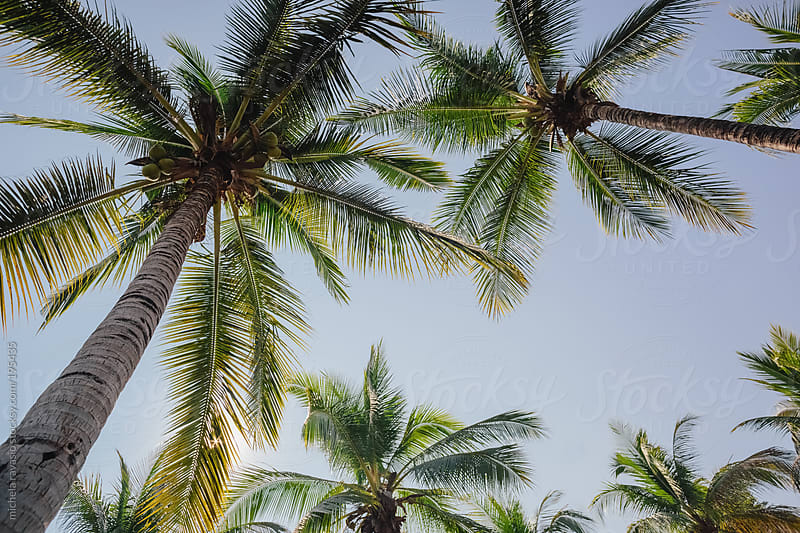 Palm trees by michela ravasio for Stocksy United