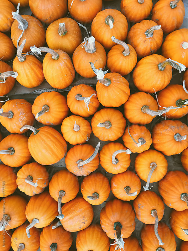 Small pumpkins by Kristen Curette Hines for Stocksy United