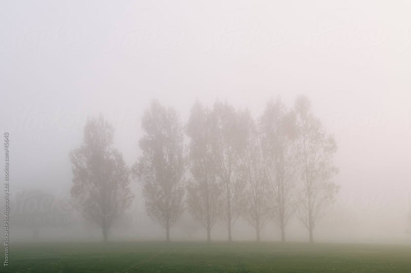 Trees, park and early morning fog, Christchurch New Zealand. by Thomas Pickard Photography Ltd. for Stocksy United