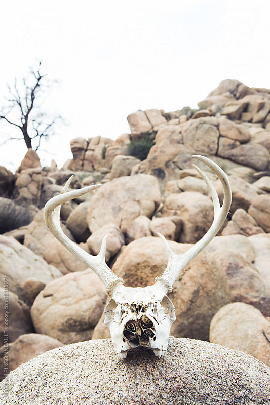 Deer Skull and Desert Rocks by MEGHAN PINSONNEAULT for Stocksy United