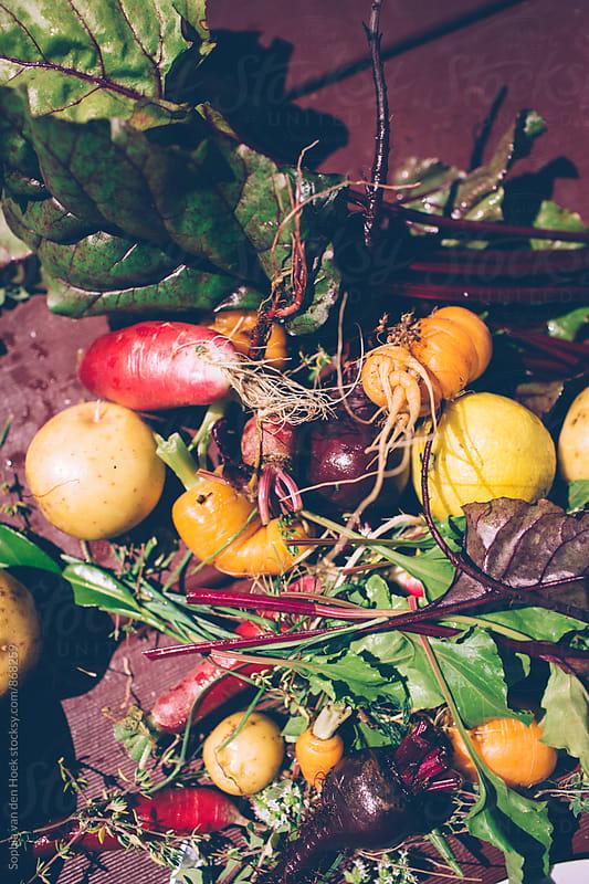 Vegetables by Sophia van den Hoek for Stocksy United