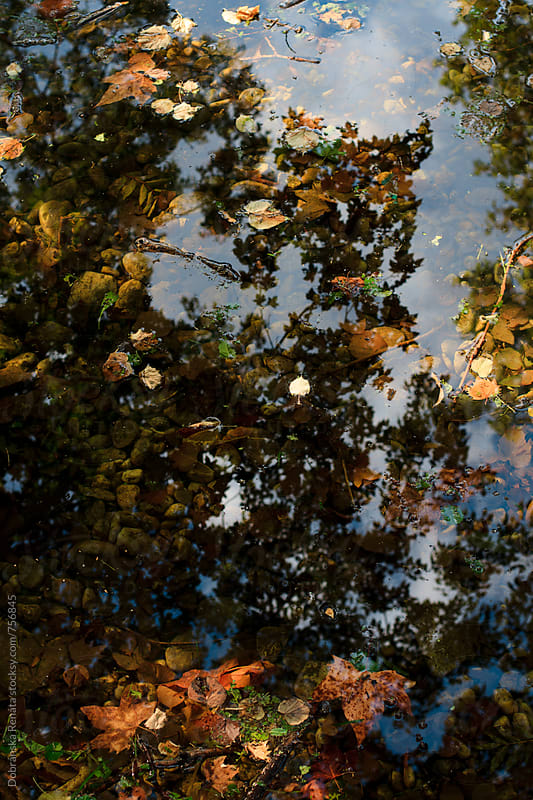 Autumn leaves and trees reflecting in the water by Dobránska Renáta for Stocksy United
