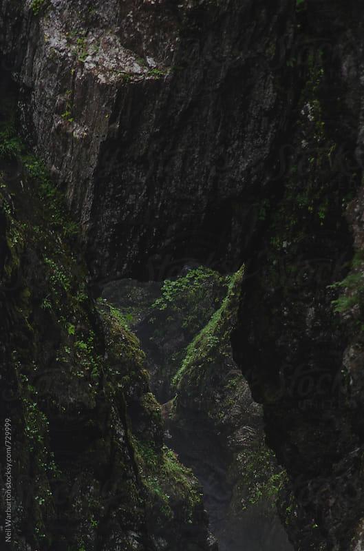 Mountain gorge detail by Neil Warburton for Stocksy United