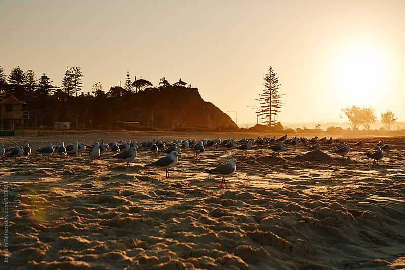 Birds in the Sunset by Joaquim Bel for Stocksy United