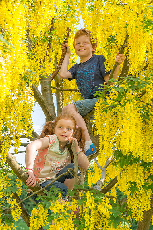 Children climbing a tree in the countryside by Craig Holmes for Stocksy United