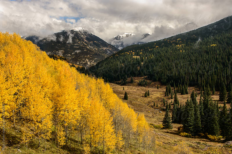 Golden aspens in the mountains with first snow in the distance by Mick Follari for Stocksy United