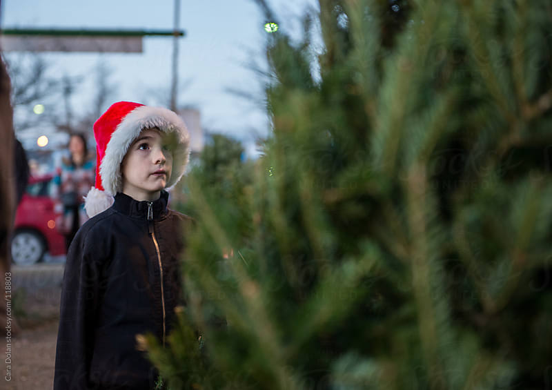 Boy wearing Santa hat looks up at a tree at a Christmas tree stand by Cara Dolan for Stocksy United