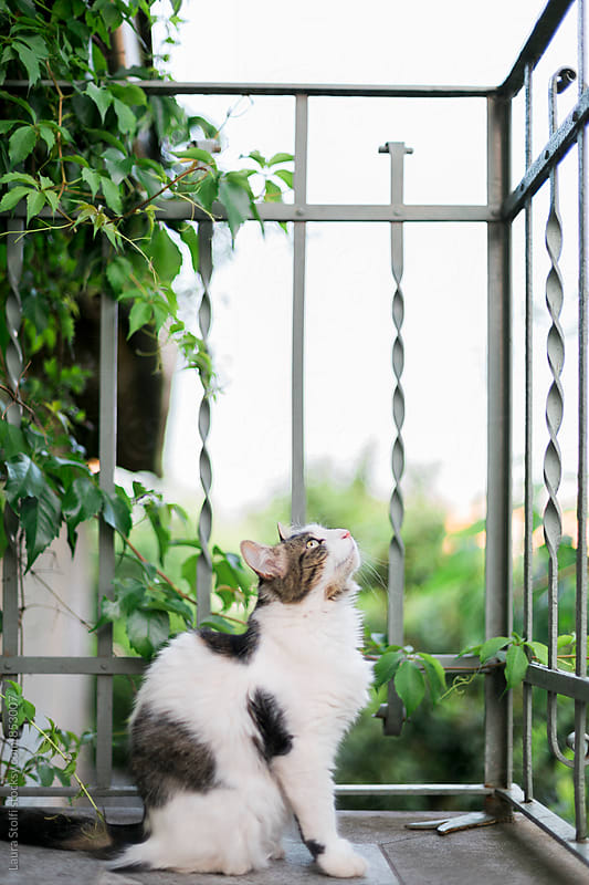 Cat sits and looks at the top of balcony balustrade by Laura Stolfi for Stocksy United