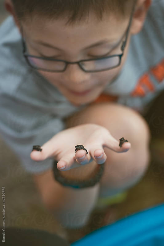 Boy Playing With Baby Frogs by Ronnie Comeau for Stocksy United