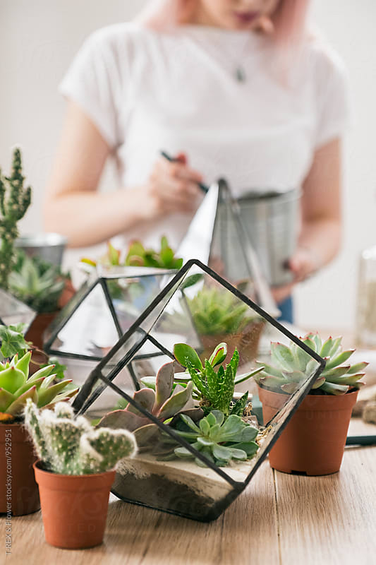 Close-up of succulents in pots and greenhouses by Danil Nevsky for Stocksy United