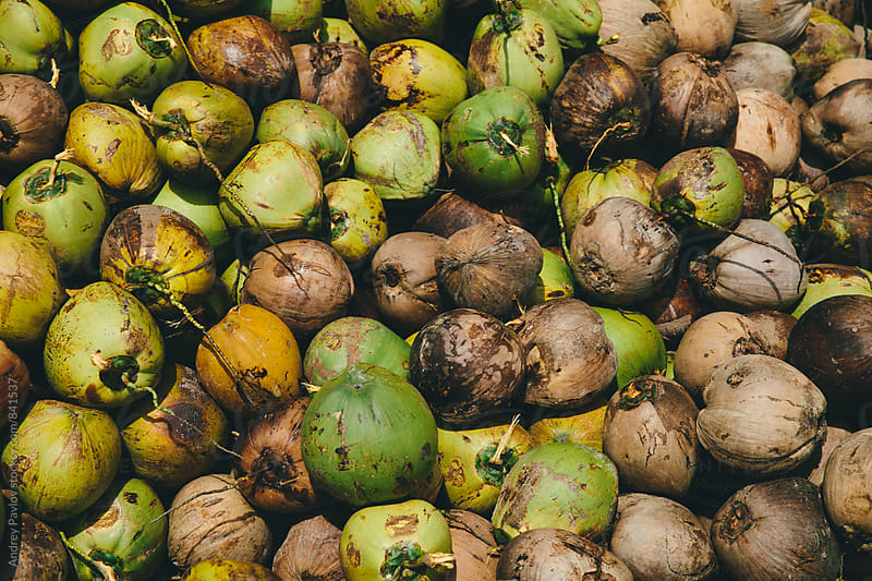 Delicious coconuts by Andrey Pavlov for Stocksy United