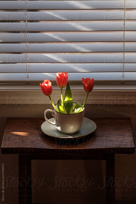3 tulips sit in a mug splashed with morning sun. by Riley J.B. for Stocksy United