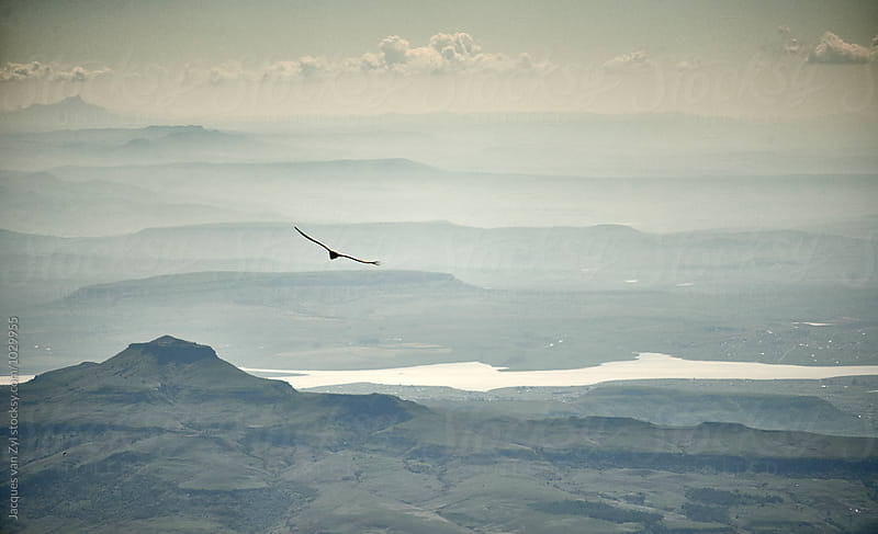 A Cape Vulture flying over a mountainous landscape at dusk. by Jacques van Zyl for Stocksy United