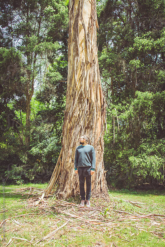 Tall trees please by Diane Durongpisitkul for Stocksy United