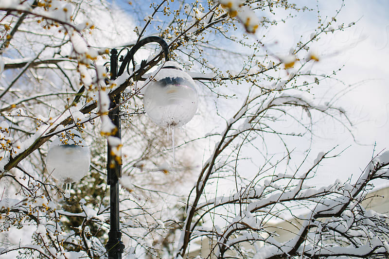 Street lamps with icicles surrounded by snowy branches with yellow flowers. by Julia Forsman for Stocksy United