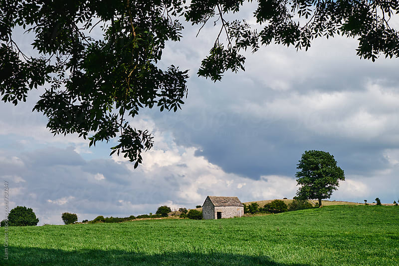 Small barn and tree on a hillside. Derbyshire, UK. by Liam Grant for Stocksy United