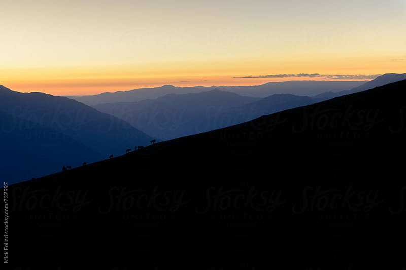 Burros silhouetted agains a sunset sky in the Peruvian Andes by Mick Follari for Stocksy United