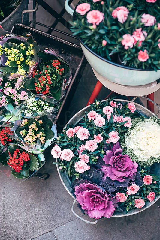 Various flowers and plants in a street market by Vera Lair for Stocksy United