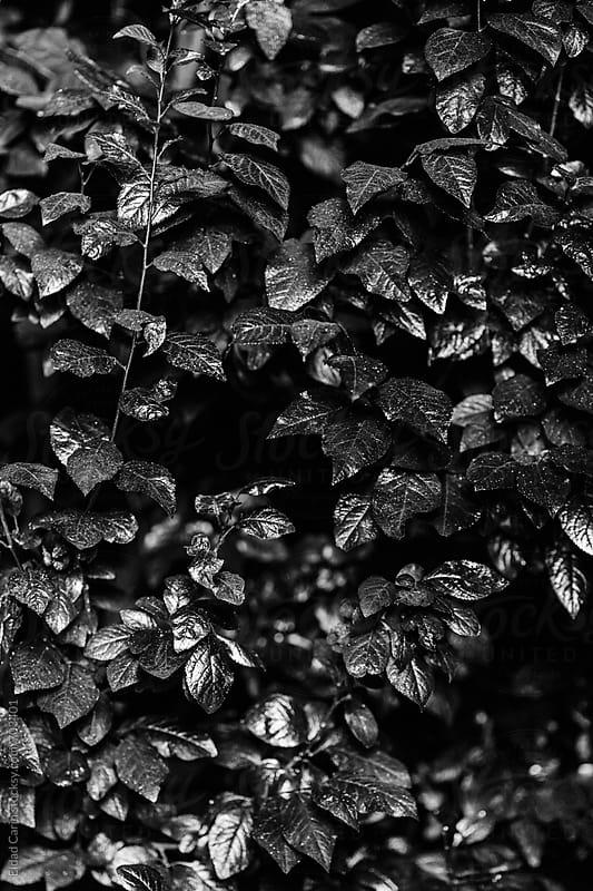 Black & White Metallic Foliage by Eldad Carin for Stocksy United