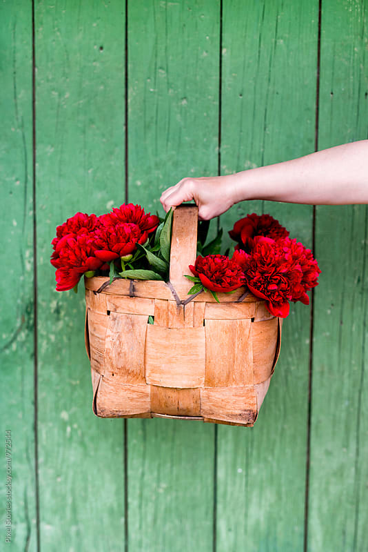 Woman holding basket of red peonies  by Pixel Stories for Stocksy United