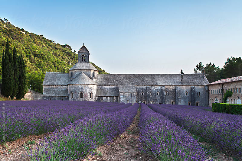 Sénanque Abbey with lavender fields by Marilar Irastorza for Stocksy United