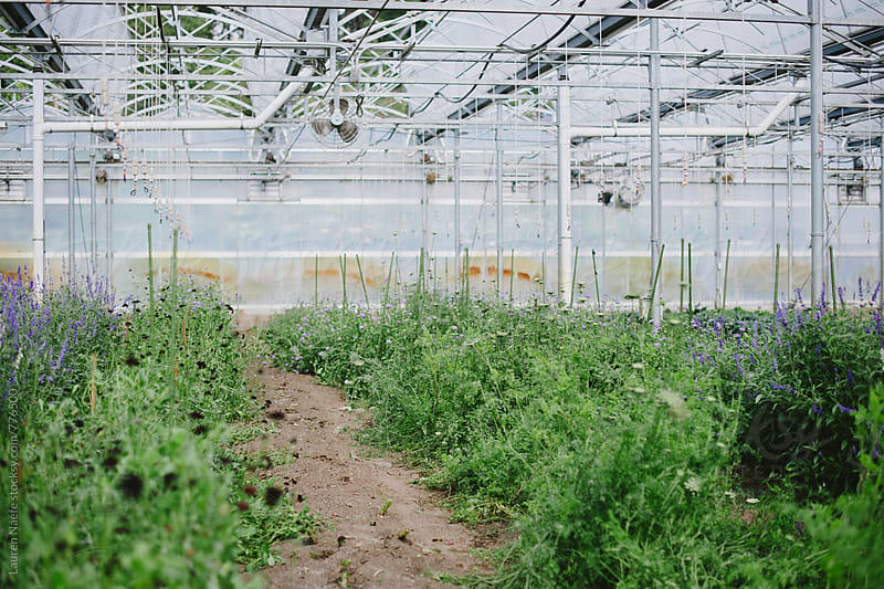 Greenhouse full of plants and vegetables by Lauren Naefe for Stocksy United