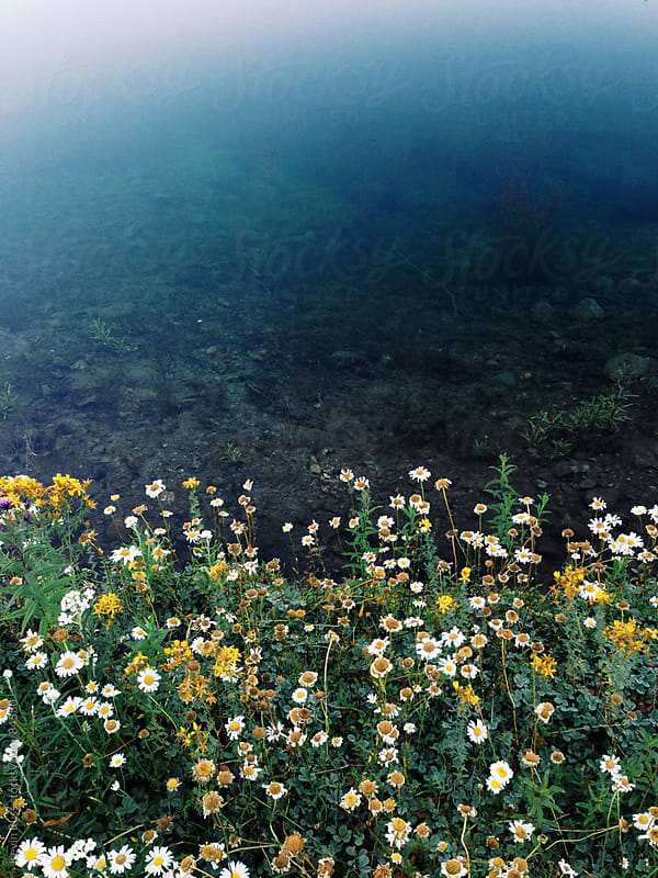 Pond Shore Wildflowers by Kevin Russ for Stocksy United