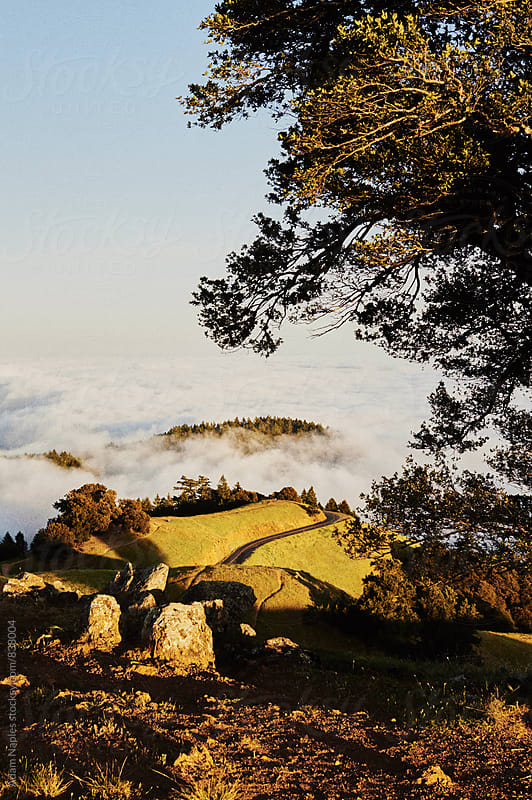 Mount Tamalpais by Adam Naples for Stocksy United