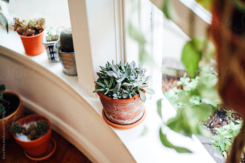 Plants on Windowsill by Kara Riley for Stocksy United
