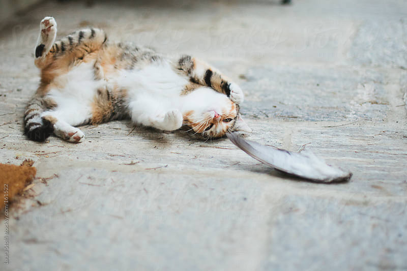 Cat laying on the belly and playing with dead bird's wing by Laura Stolfi for Stocksy United