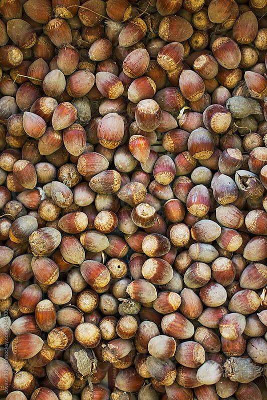 Hazelnuts close up by Jovana Rikalo for Stocksy United