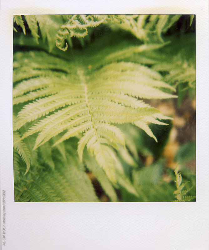 Green Fern Plants In A Summer Garden Photographed With Expired Polaroid Film by ALICIA BOCK for Stocksy United