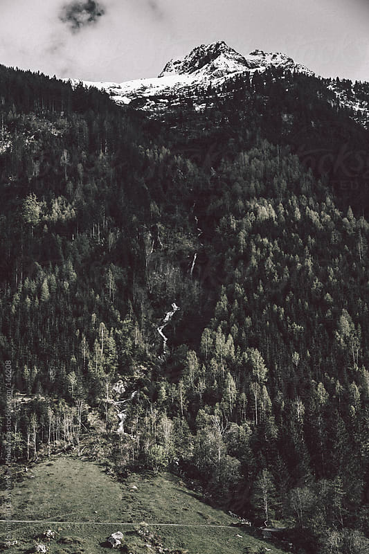 Pine tree dotted mountain side by Maximilian Guy McNair MacEwan for Stocksy United