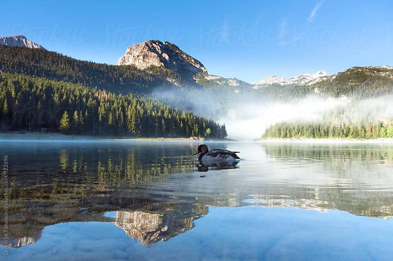 Mountain lake by Dimitrije Tanaskovic for Stocksy United