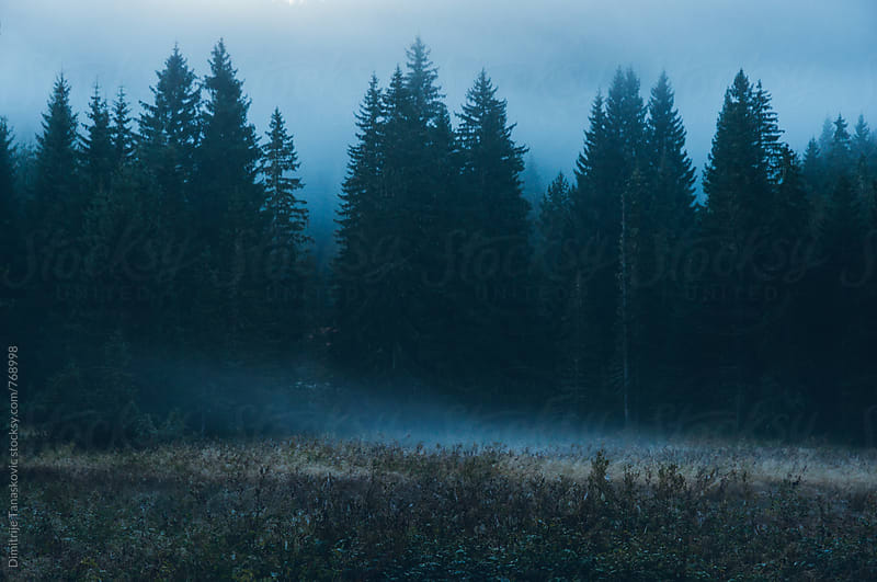 Pine forest in the morning covered with light fog by Dimitrije Tanaskovic for Stocksy United