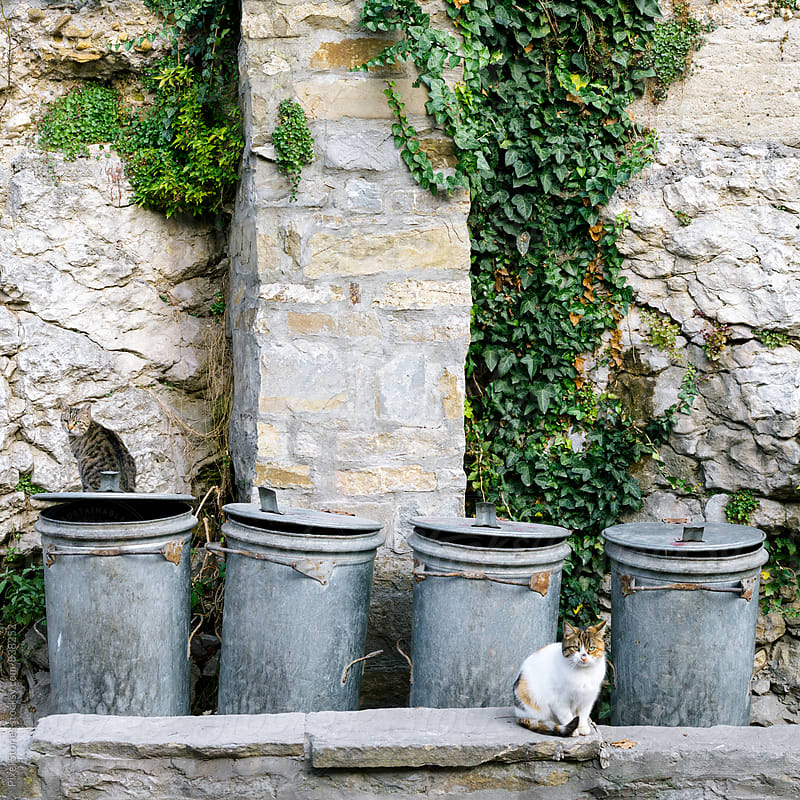 Cats sitting next to trash cans by Pixel Stories for Stocksy United