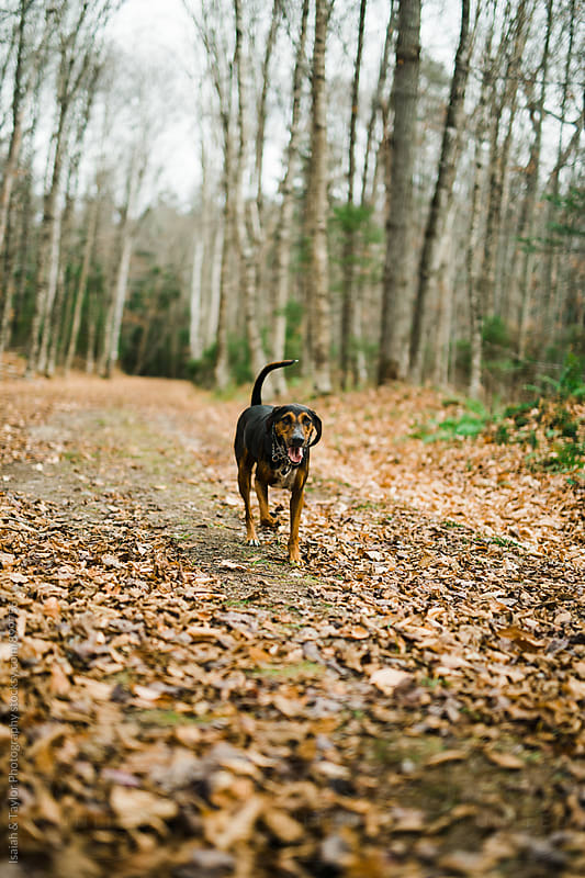 Dog walking on trail by Isaiah & Taylor Photography for Stocksy United