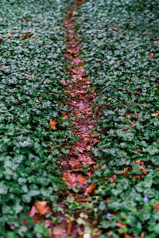 Forest path through ivy by Pixel Stories for Stocksy United