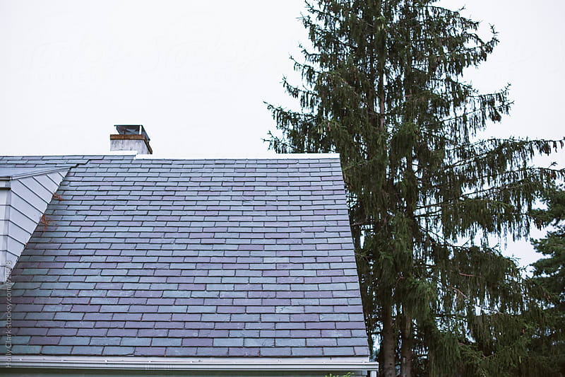 A slate roof on an older home next to a Pine tree. by Holly Clark for Stocksy United