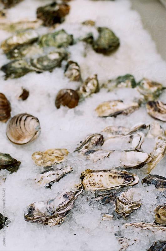 Oysters on ice by Lyuba Burakova for Stocksy United