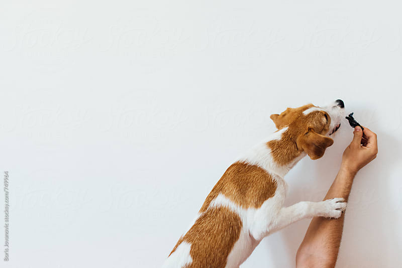 Dog playing with human hand by Boris Jovanovic for Stocksy United