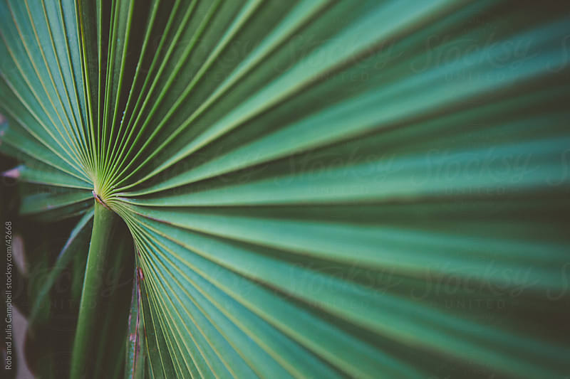 Mexican Fan Palm detail by Rob and Julia Campbell for Stocksy United