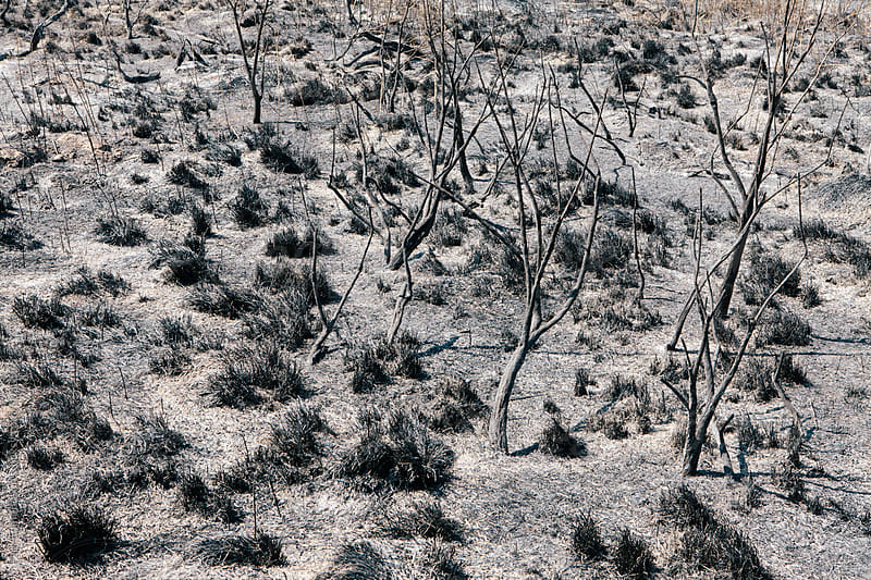 Fire damaged forest and rangeland, Nevada by Paul Edmondson for Stocksy United