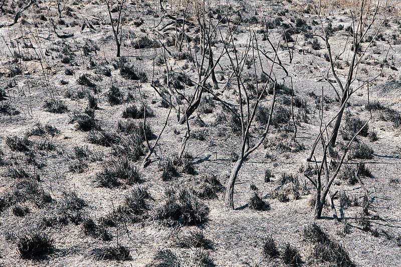 Fire damaged forest and rangeland, Nevada by Paul Edmondson for Stocksy United
