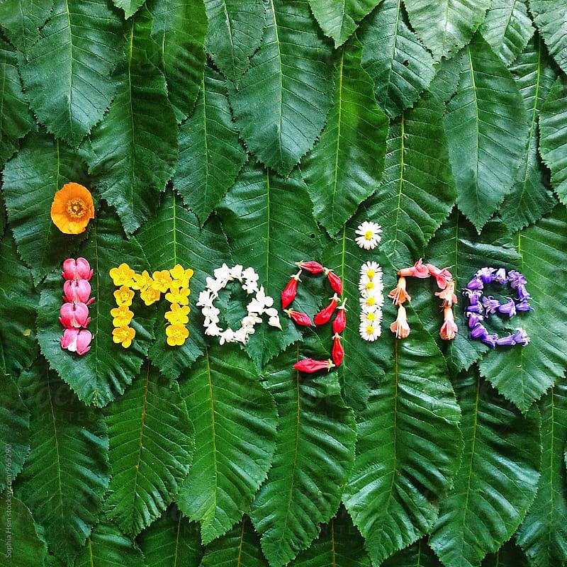 Imagine - Flower Typography by Sophia Hsin for Stocksy United