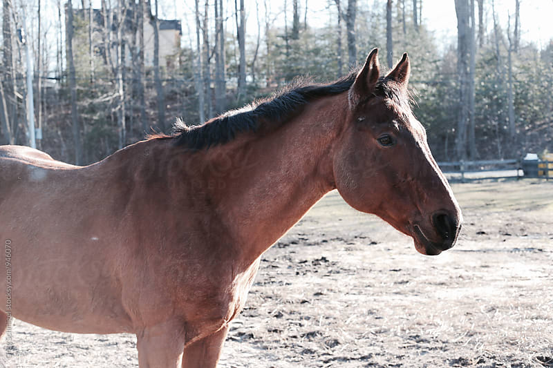a brown horse standing in a forest in the sunlight by Greg Schmigel for Stocksy United